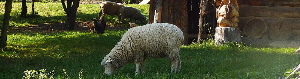 <div id='mbox' class='messageboxstyle'><i>Sheeps on Herdsman's hut Travičná</i></div>
